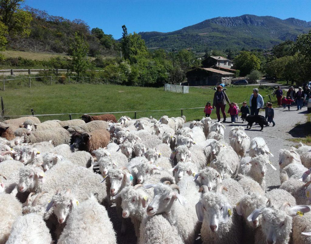 Venez visiter notre ferme cet été